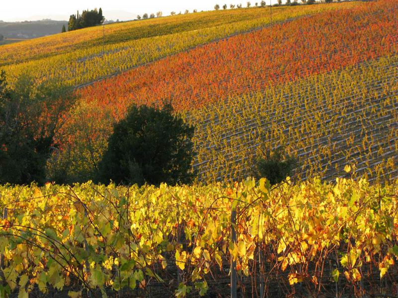 03 - Chianti, the land of Bacchus